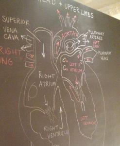 APL_chalk_heart